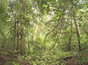Sette Cama and Loango National Park | David Korte Photographs