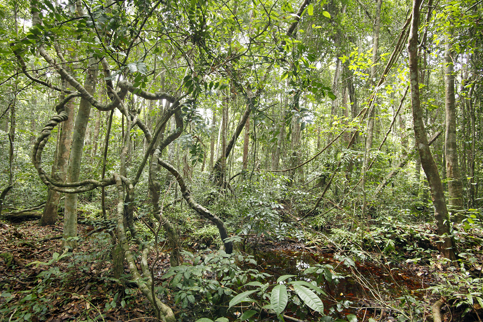 congo rainforest ecosystem The congo basin forms the tropical rainforest at the core of the continent the   ecoregions or biomes are large geographic units that encompass areas of.