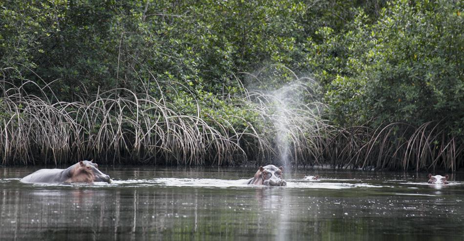 February 2, 2013  Loango National Park | David Korte Photographs