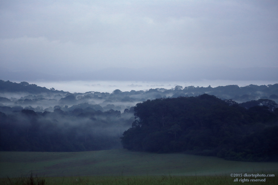 Transpiration in the forest. Dawn comes slowly in the hills of Vera Plaines.
