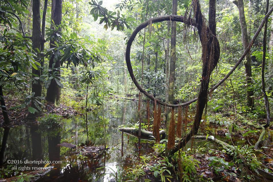 forest_3Savanes_0379_DKorte