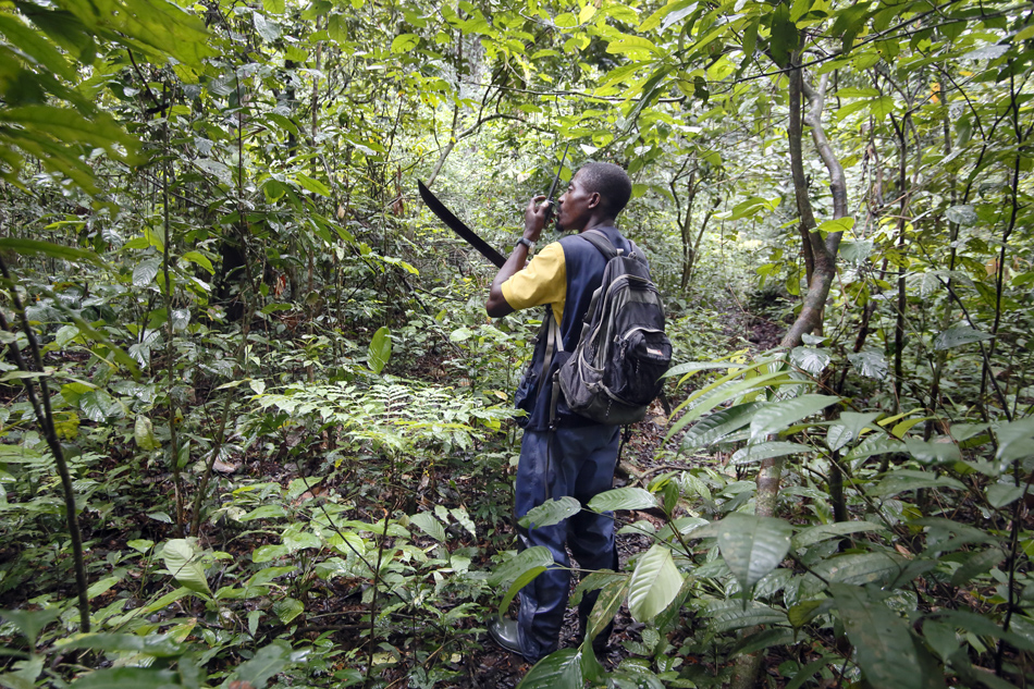 Trying to stay in radio contact, Alain searches for a signal in the dense forest.