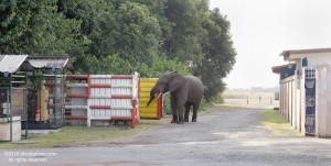 A heavy barricade surrounding trash bins is useless to exclude elephants if the gate is left open.