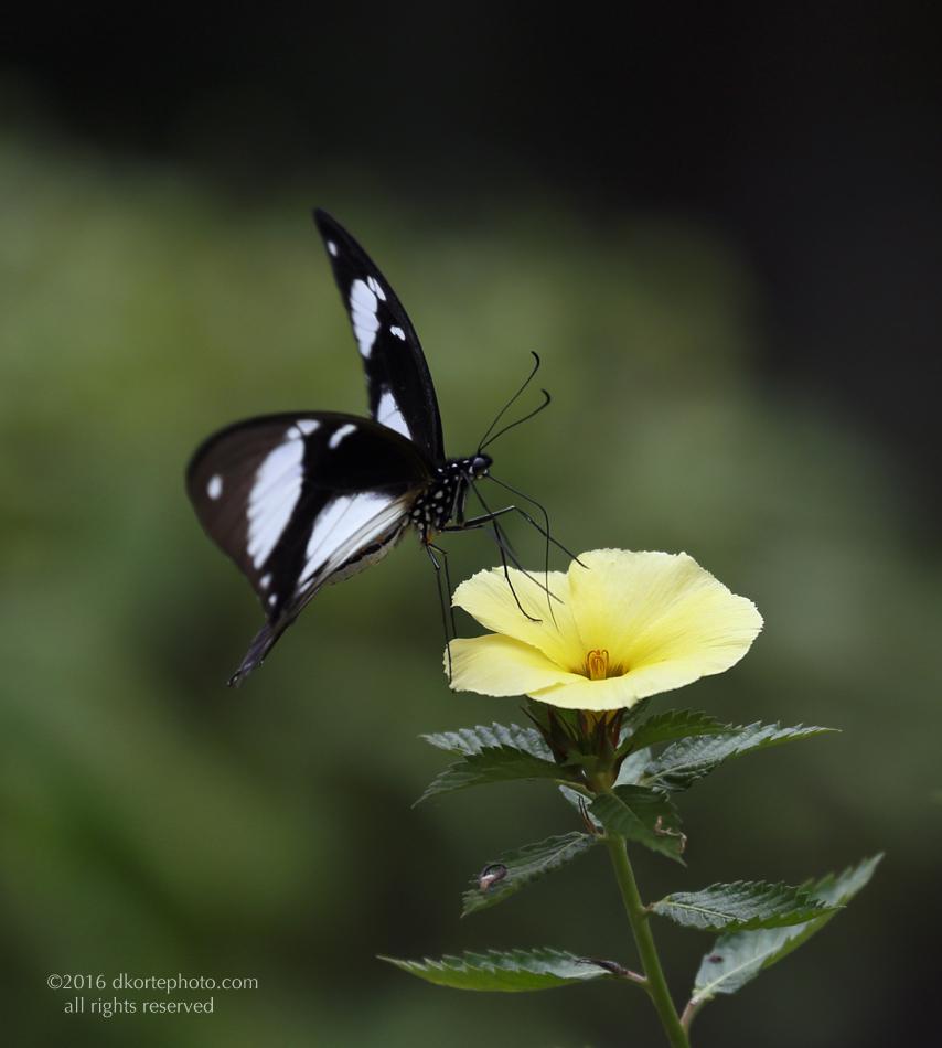 butterflyBW_5509