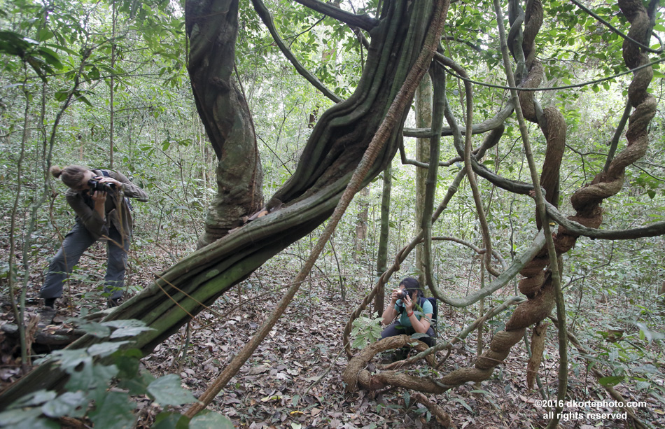 Andrea and Shivangi search for interesting perspectives among a cluster of lianas in the Vera Plaines rainforest