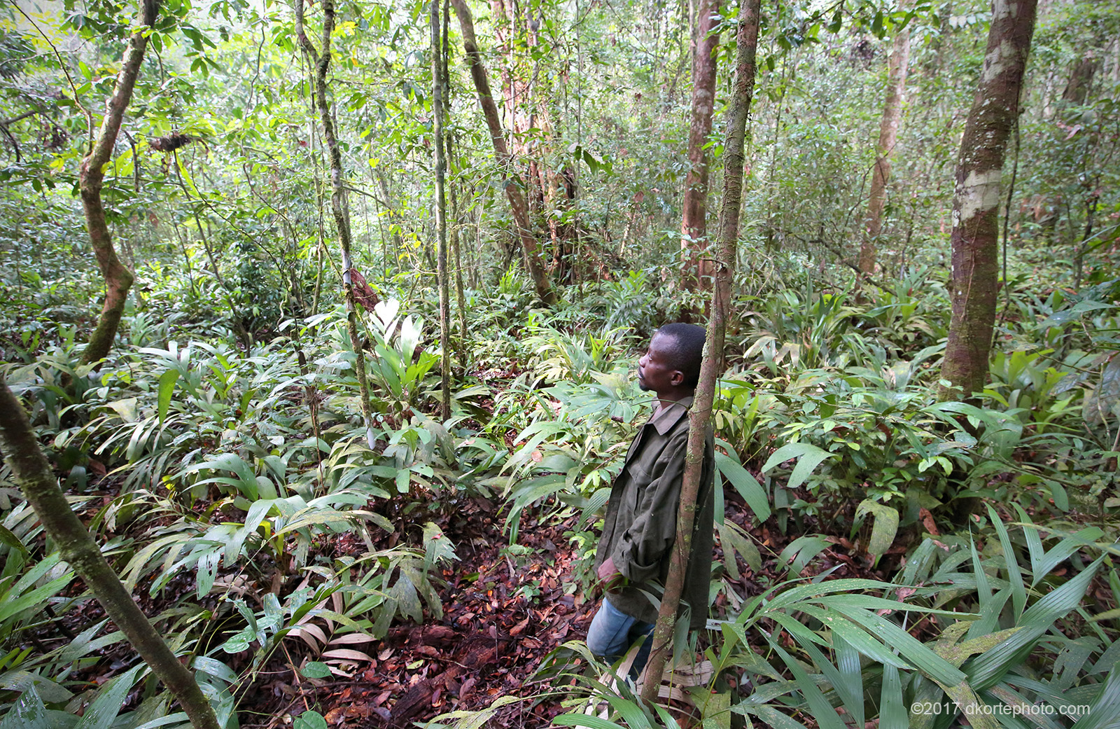 Kollie, one of our guides, listens to the forest at the end of a rain.
