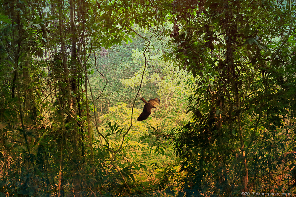 A kite passes a canopy break along the Sinoe River, marking the western border of the park.