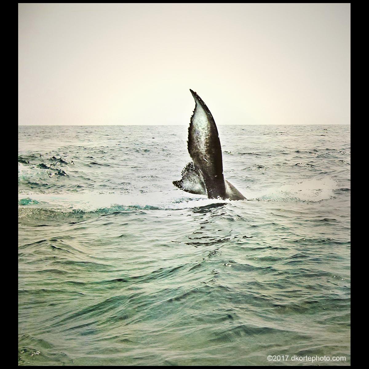 whaleTail_1200_DKorte