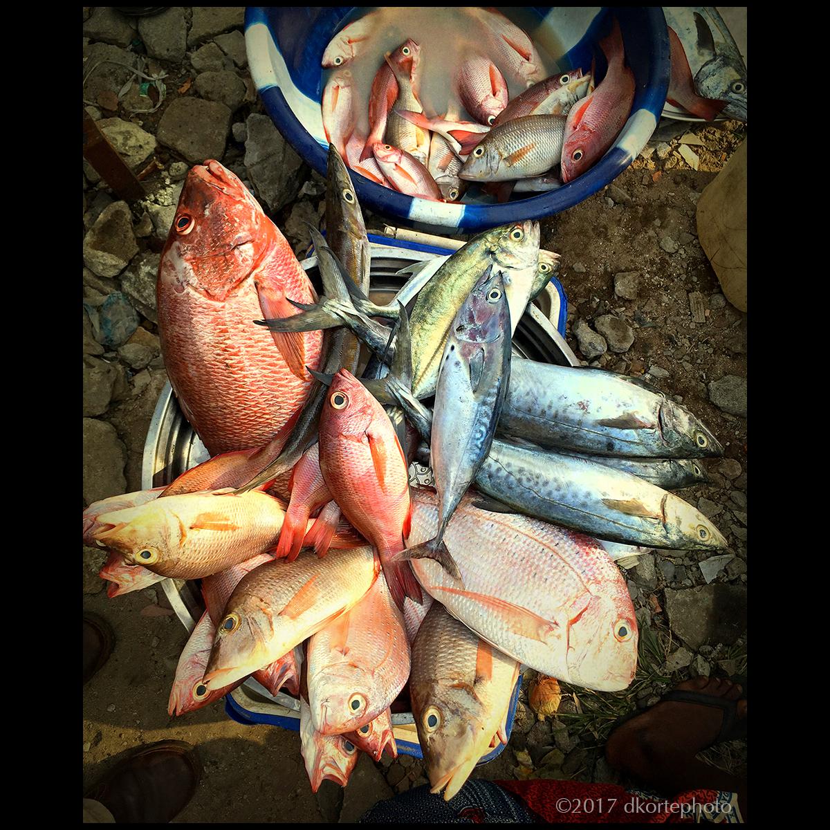 fishMarket_dkorte