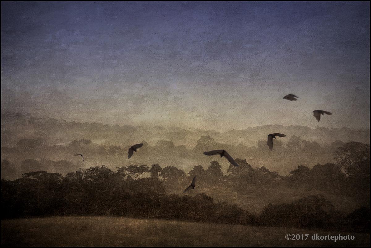 TwilightAfricanForest_dkortephoto