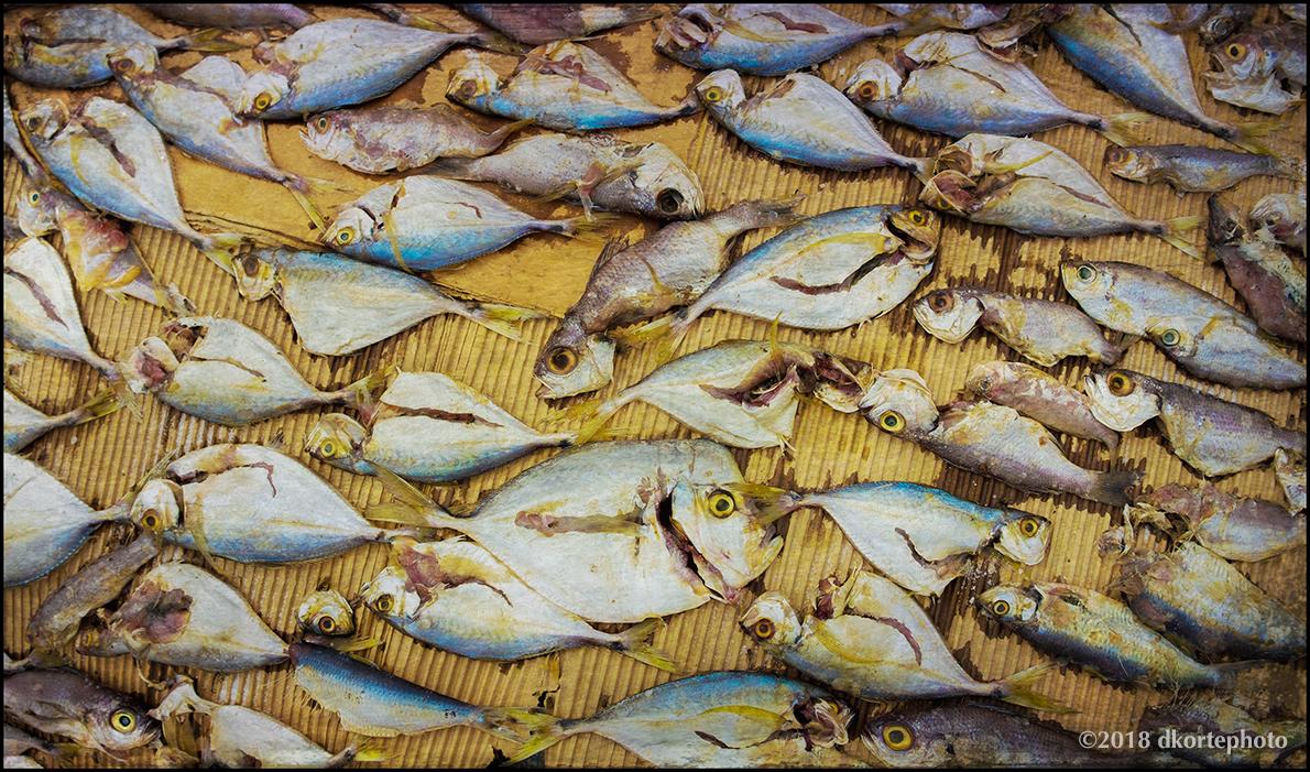 dryFish02_DKortephoto