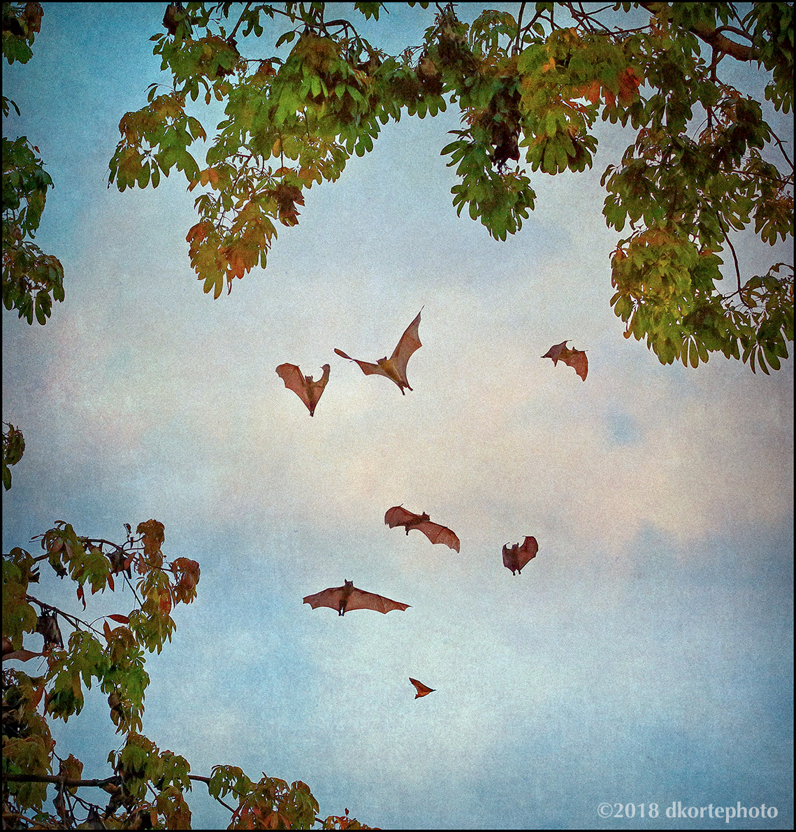 A flutter of fruit bats hover before entering a tree canopy.